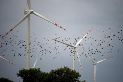 Ile ptaków zabiją wiatraki?