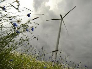 Szpetny wiatrak k. Suwałk wśród dzikich ziół